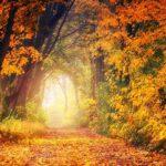 「秋」はフランス語でautomne(オトンヌ)?季節に関する単語の読み方と意味