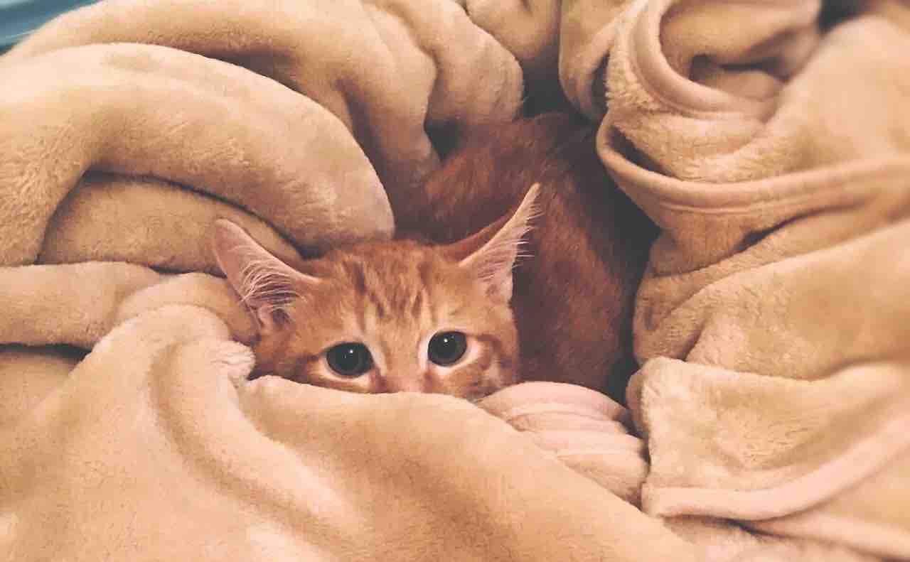 ブランケットに包まれる猫