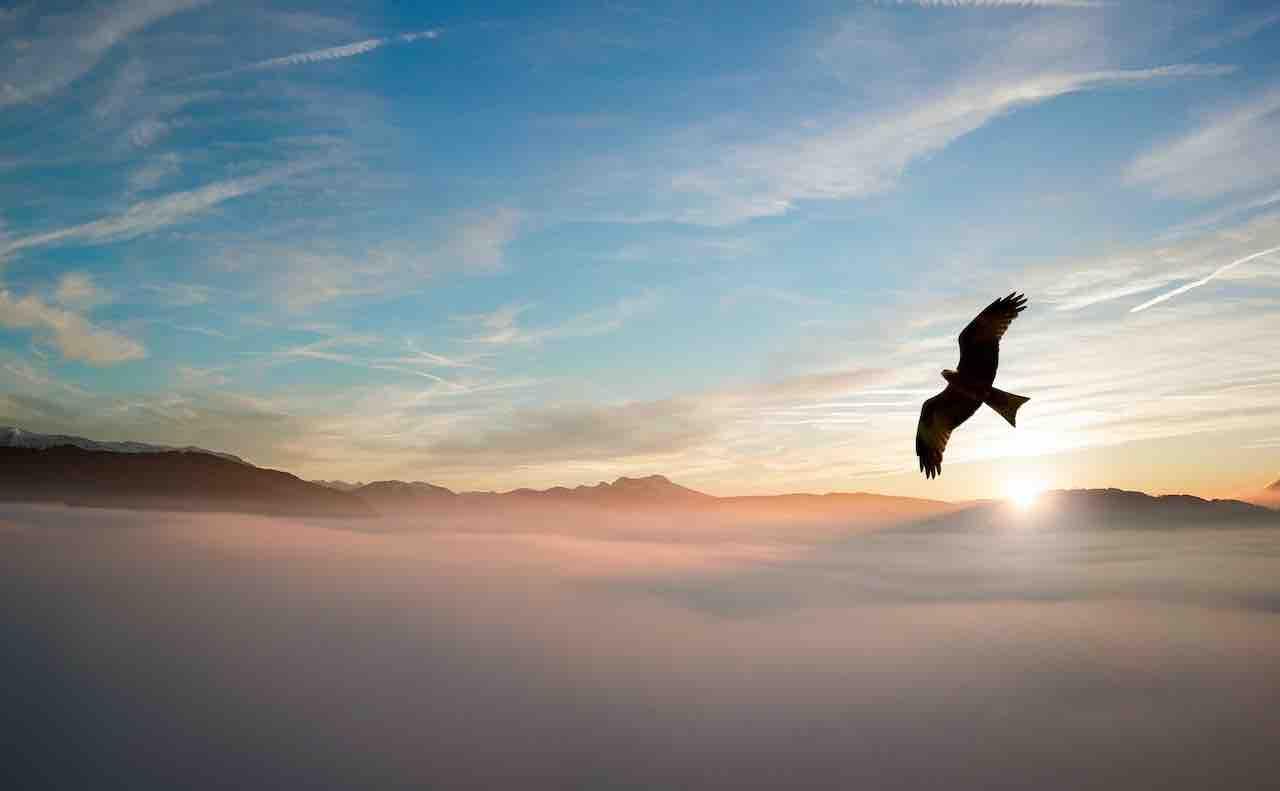 自由に空を舞う鳥