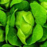 「緑」はフランス語で…vertの読み方と意味は?色に関するフランス語の単語