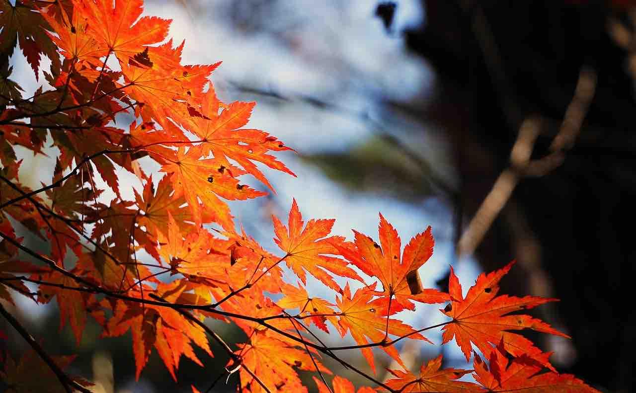 秋の川と紅葉