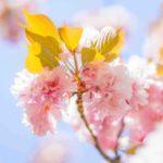 「春」はフランス語でprintemps(プランタン)?季節に関する単語の読み方と意味