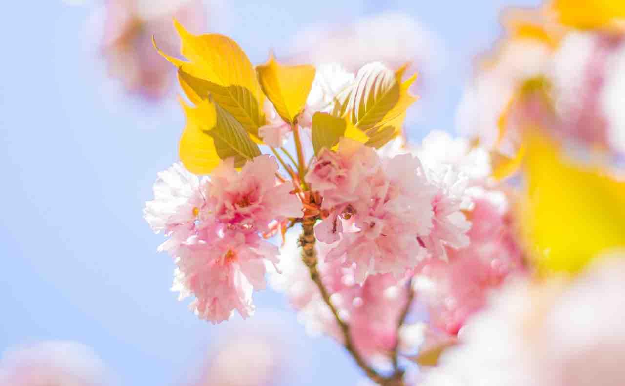 やってきた春