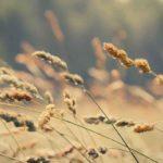 「風」はフランス語で?vent(ヴォン)の意味と風に関するフランス語の表現