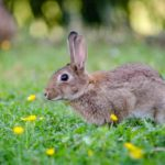 lapin(ラパン)の意味は「うさぎ(兎)」?動物に関するフランス語