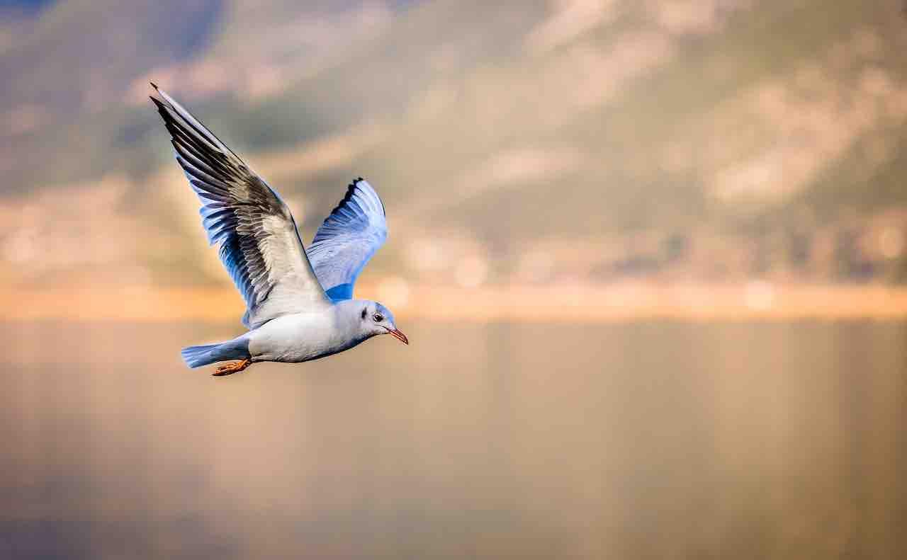 翼を広げて舞う鳥