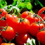 「トマト」はフランス語で?野菜に関するフランス語