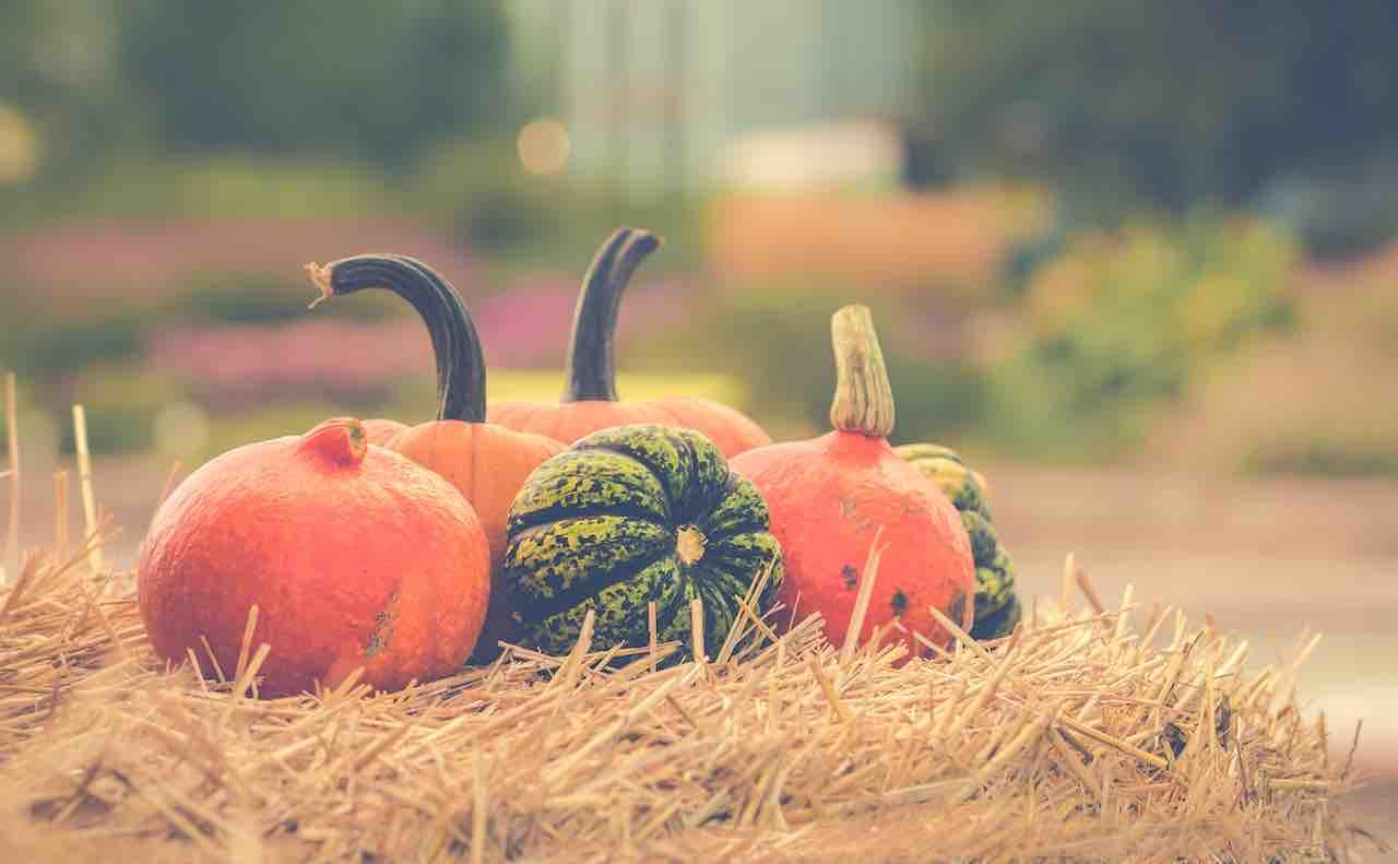 様々な種類のかぼちゃ