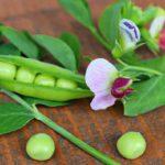 「豆」はフランス語で?様々な豆の呼び方を紹介